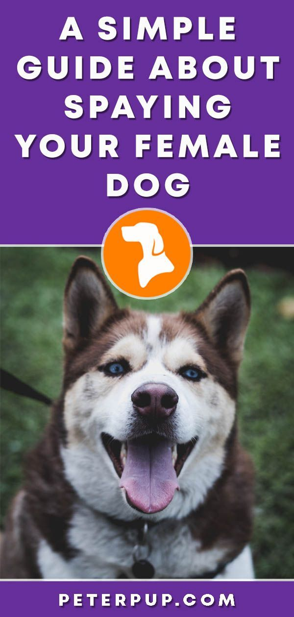 introduction paragraph about dogs