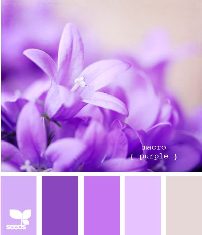 macro purple
