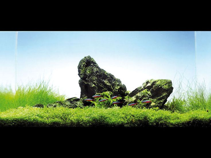En mode rocailles : L'aquascaping, des paysages en bacs - Journal des Femmes Jardin