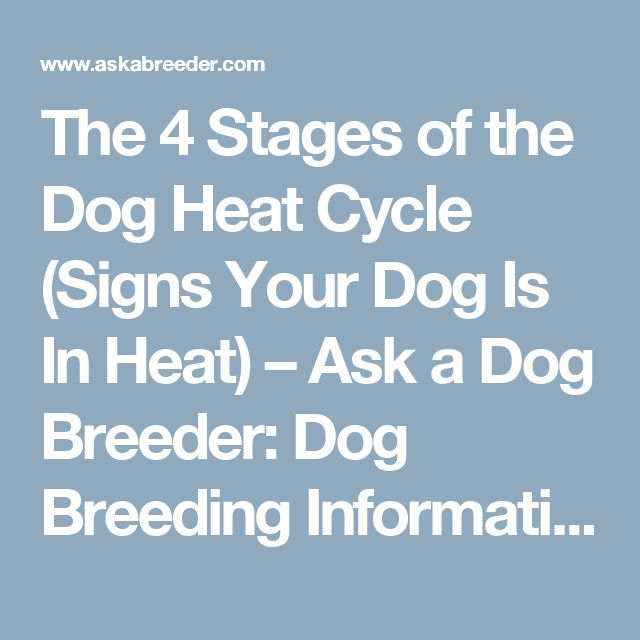 The 4 Stages of the Dog Heat Cycle (Signs Your Dog Is In Heat) – Ask a Dog Breeder: Dog Breeding Information, Storefront, Questions, Tips, Advice & Forums - Dog Mating