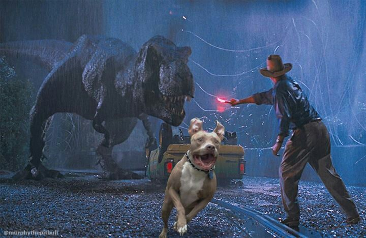 Murphy the Pit Bull| More screen shots of the deleted scenes from Jurassic Park were leaked by an anonymous source at Universal Studios and published online today in the Los Angeles Times. Spielberg has refused to comment, but one of his aides confirmed that these scenes were removed largely so that the Velvet Burrito and his glorious Flaps of Destiny would not distract from the movie and the other actors. Jeff Goldblum was rumored to have complained that he did not want to be on screen with…