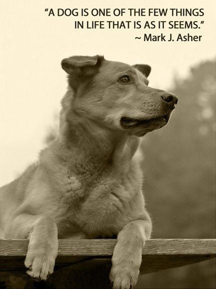 A Dog Is One Of The Few Things In Life...