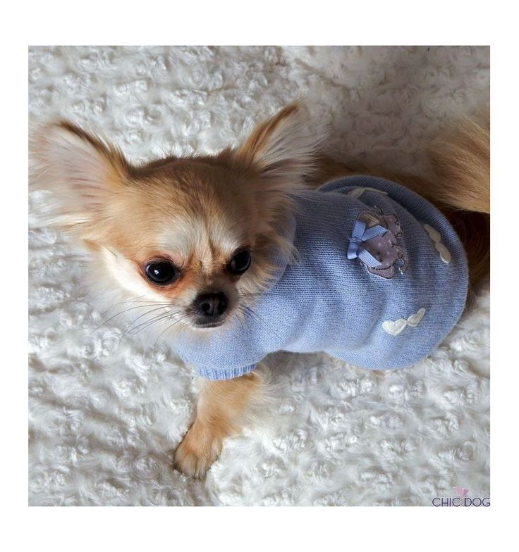 Here our model wearing Baby Boy #pull by Babydog Botique