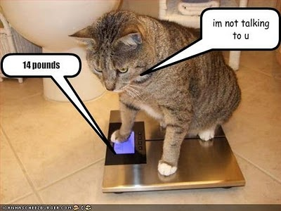 .: Animal Funnies, Funnies Cats, Funnies Videos, Funnies Animal Pictures, Funnies Animal Photo, Amusement Animal, Funnies Quotes, 14 Pounds, Funnies Stuff