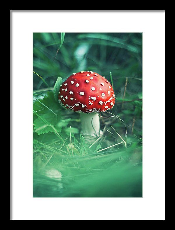 Framed Print featuring the photograph Red Mushroom by Oksana Ariskina Red fly agaric mushroom in a green grass. Available as mugs, posters, greeting cards, phone cases, throw pillows, framed fine art prints, metal, acrylic or canvas prints, shower curtains, duvet covers with my fine art photography online: www.oksana-ariskina.pixels.com #OksanaAriskina