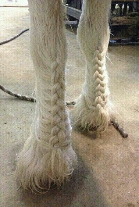 Braided Clydesdale feathers. also known as- somebody has a lot of time on their hands. and a butt ton of skill