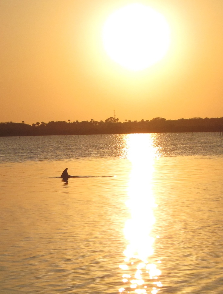 48 best murray trip to disney images on pinterest for New smyrna beach fishing spots