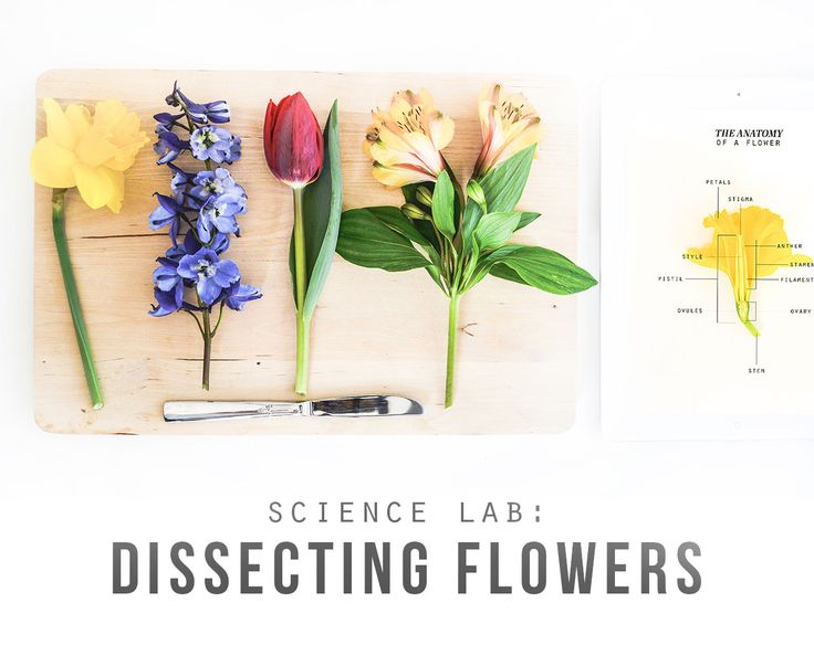 Dissecting flowers (with free prinatbles)