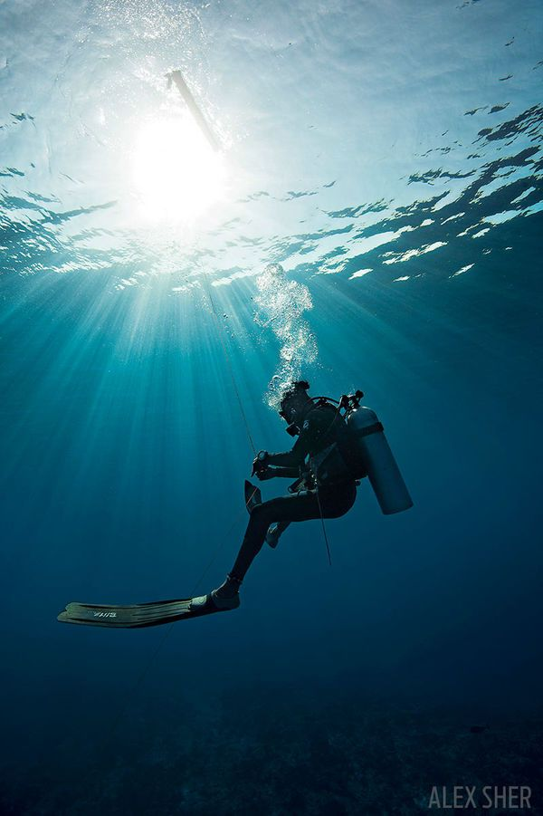Learn how to save yourself if a dive turns ugly with these self rescue techniques, and practice, practice, practice.