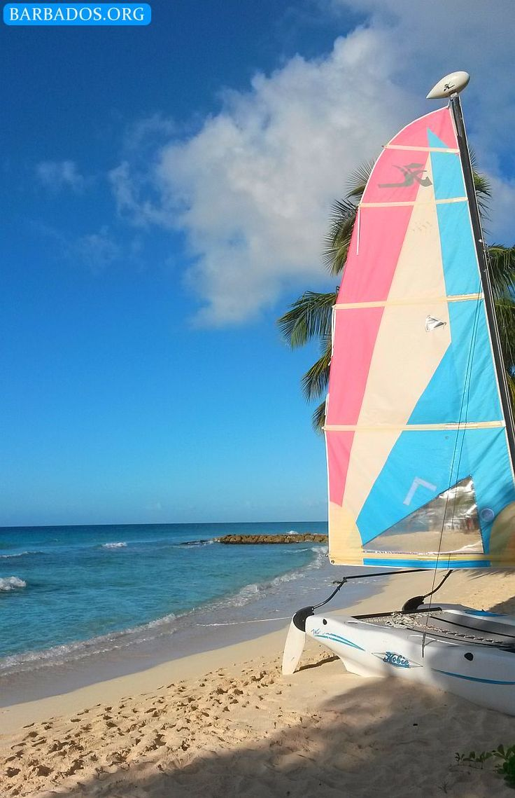 Who wants to go on a Hobie Cat sail on the warm clear waters around Barbados?