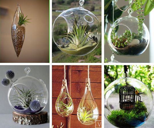 A cluster of hanging glass terrariums is an unexpected and lovely addition to a space.