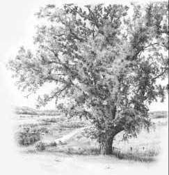 How to Draw Trees with Pencil tutorial by Diane Wright