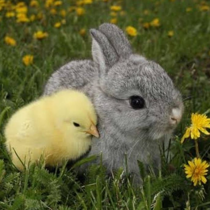 New The 10 Best Home Decor With Pictures Opening Hours For Easter Good Friday Closed Satur Cute Baby Bunnies Cute Little Animals Baby Animals Pictures