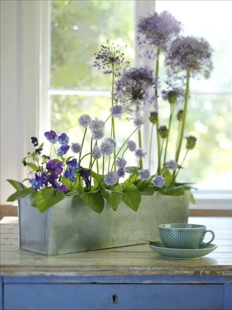 Blue flowers in zink box.: Spring Flowers, Teas Time, Blue Flowers, Teas Cups, Flowers Arrangements, Bunch Of Flowers, Floral Arrangements, Teas Flowers, Planters Boxes