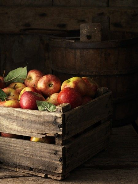 beautiful fall apples