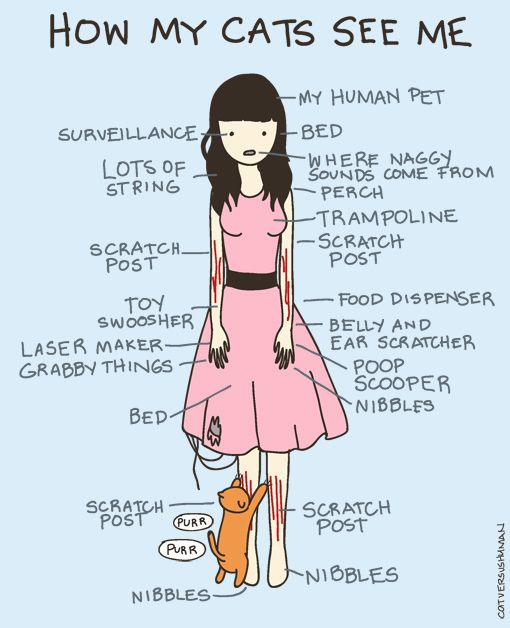 How My Cat Sees Me by aprintaday, via Flickr: Cats, Catladi, Pet, Crazy Cat, Funny Stuff, So True, Cat Ladies, Kitty, Animal