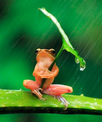 sheltered frog (frogs came out after the rain. did you know?):