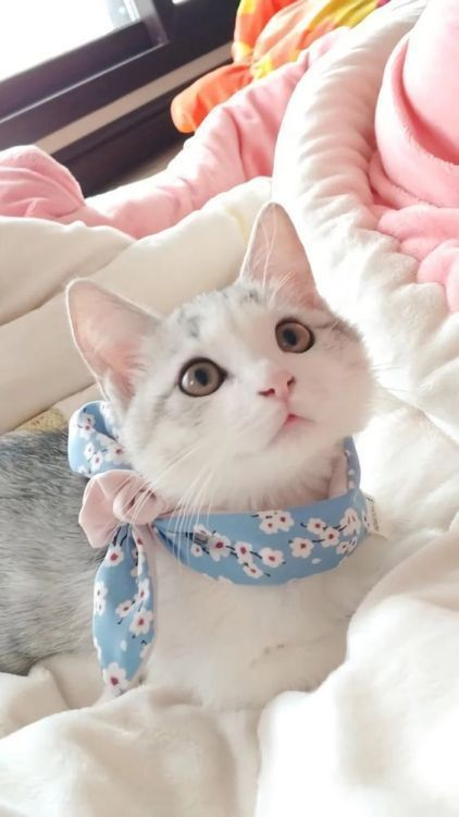 Such a pretty kitty
