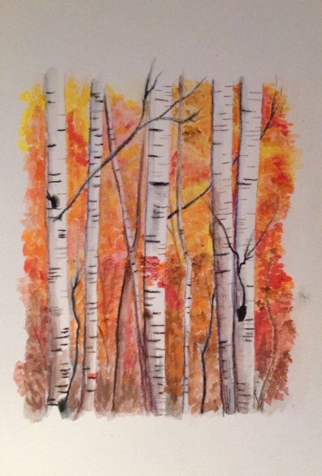Birch trees Watercolor