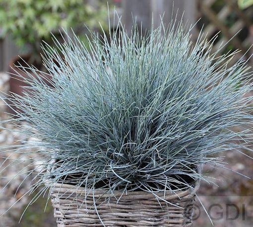 45 best plant cultivars: ornamental grasses images on pinterest, Gartenarbeit ideen