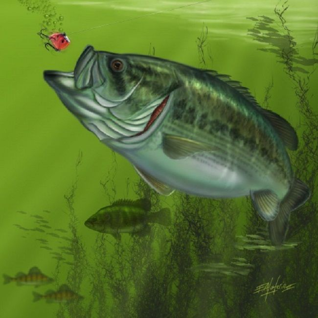 127 best fish art images on pinterest fishing fishing for Bass fish painting