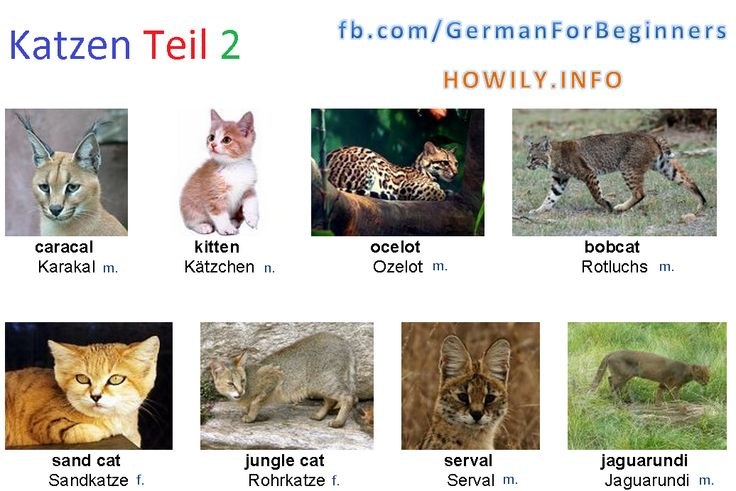 German For Beginners: Cat 2