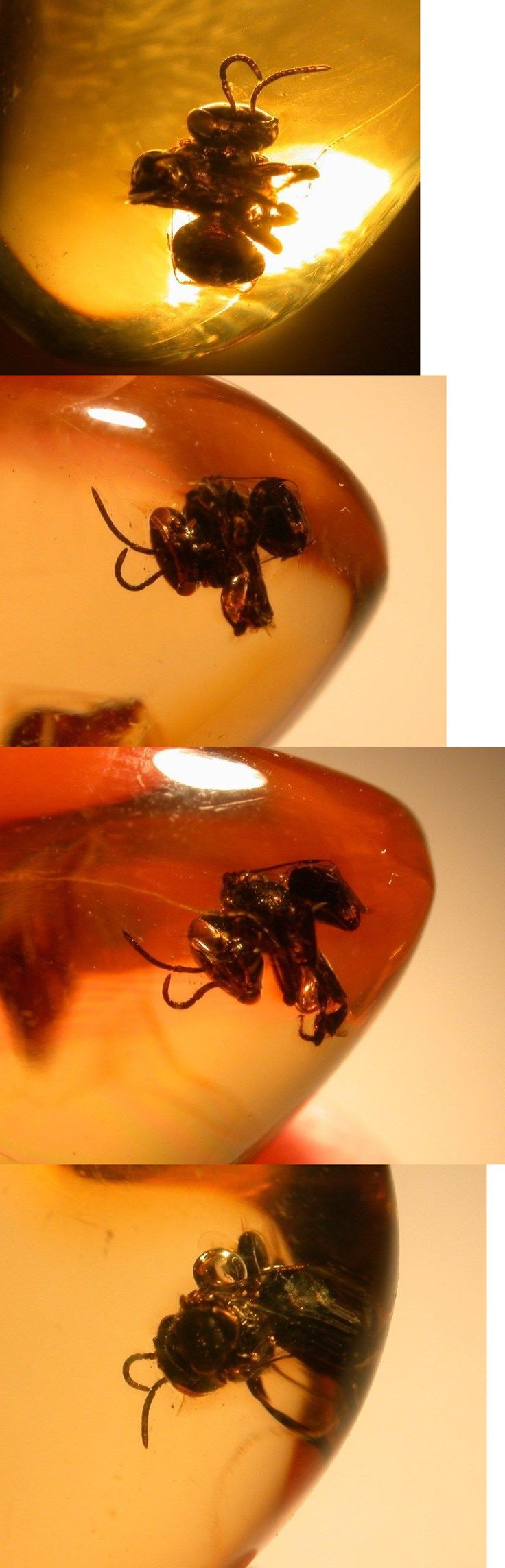 Amber 10191: Super Rare Large Stingless Bee In Authentic Dominican Amber Gemstone Extinct -> BUY IT NOW ONLY: $125 on eBay!