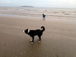 Dog walks: Portmarnock beach | A dog's paw