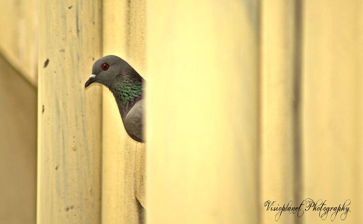 I Hide You Seek! #Hyderabad #Nature #NaturePhotography #Photography #PortraitPhotography #Urban #Wildlife