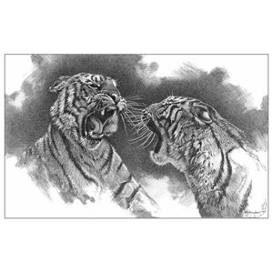 "by Kevin J Hayler. 'Rough and Tumble'  335mm x 230mm ( 13.19"" x 9.05"" )  'No they're not fighting, it's a lovers tiff; not so much 'rough and tumble' as slap and tickle. Courtship in the tiger world is a boisterous affair with little room for romance, no moonlight strolls and venison for two, it's very much the case of 'oh go on then get on with it'."