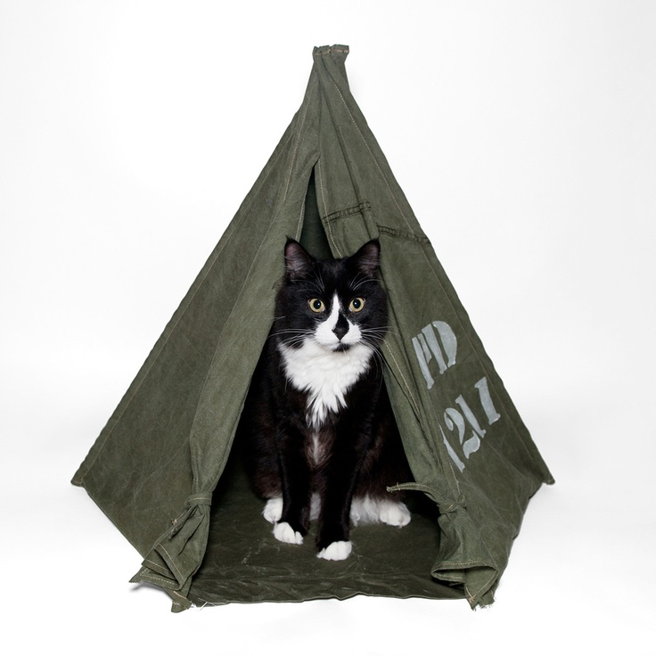 Field tent olive green l your barracks have been for Cat tent