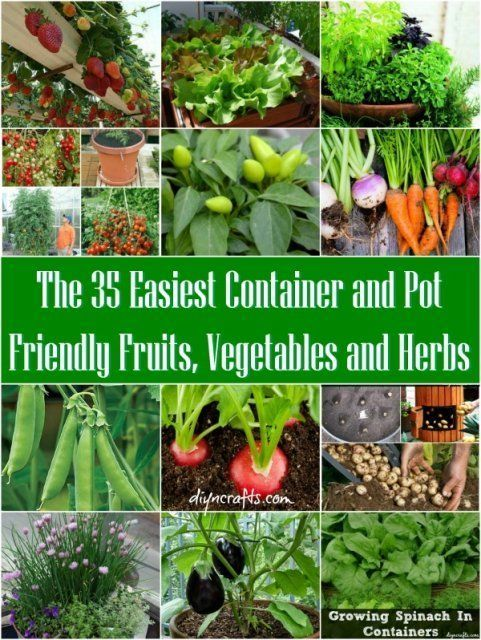 The 35 easiest container and pot friendly fruits vegetables and herbs diy container - Growing vegetables in a small space concept ...