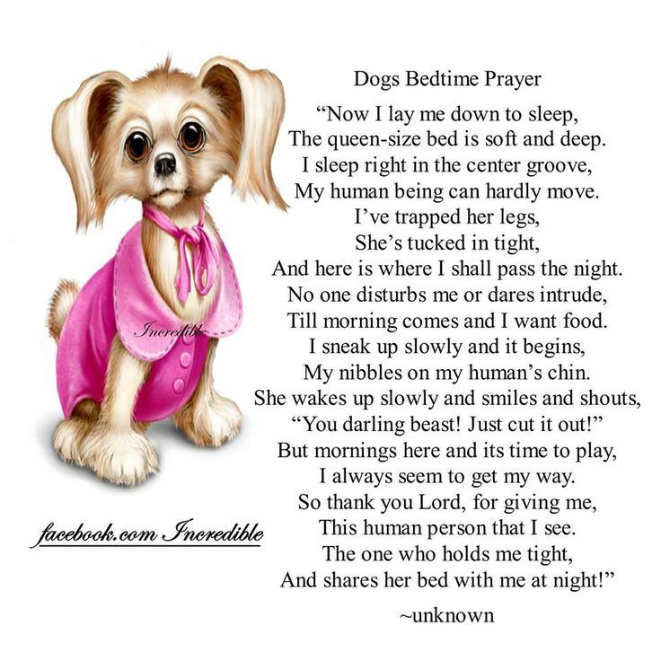 Pet Loss Prayer Uploaded To Pinterest Cats Amp Dogs