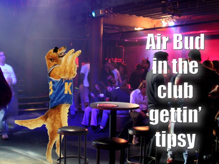 Air Bud: Parties Animal, Funny Image, Funny Humor, Giggl, Club Gettin, Funny Stuff, So Funny, Air Bud, Airbud