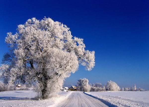 [Image: 5f2c3cfae5b31d948efc1931aff7e7ed--winter...r-snow.jpg]