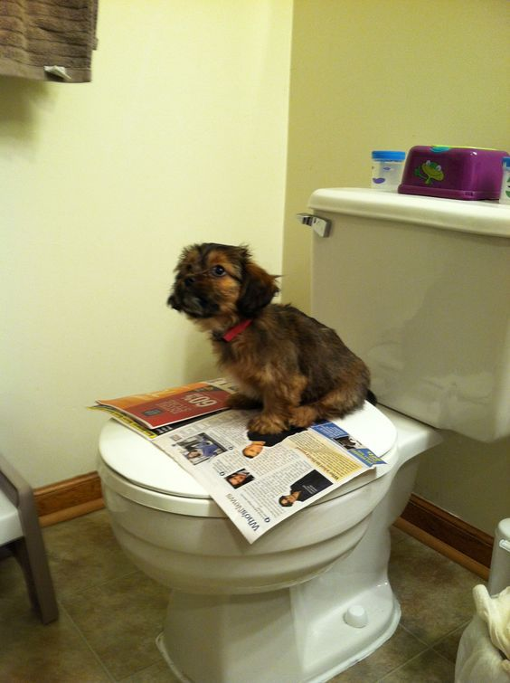 how to toilet train your puppy in an apartment