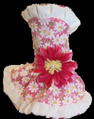 One of our favorites from the new Spring line of dog dresses exclusive to Puppy Love : Daisy Dog Dress