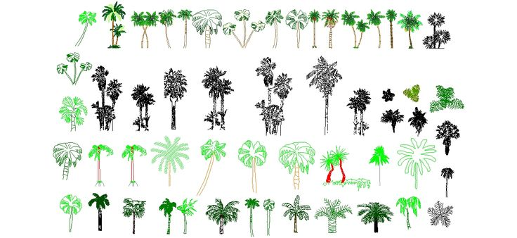 Dwg Adı : Palmiye ağaçları  İndirme Linki : www.dwgindir.com/puanli/puanli-2-boyutlu-dwgler/puanli-bitki-ve-agaclar/palmiye-agaclari.html