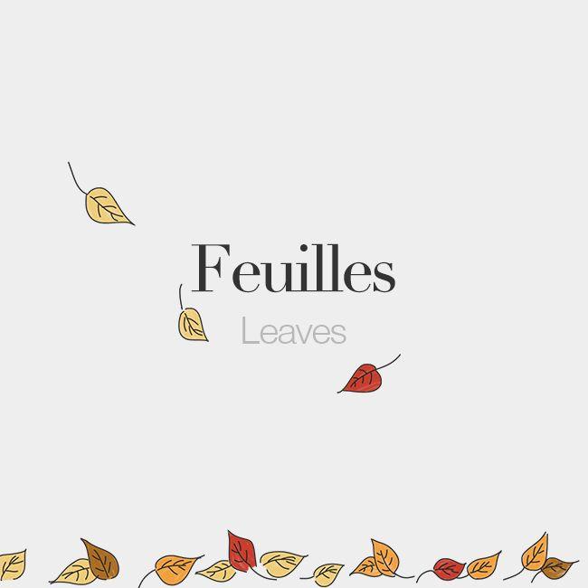 Feuilles (feminine word) | Leaves | /fœj/