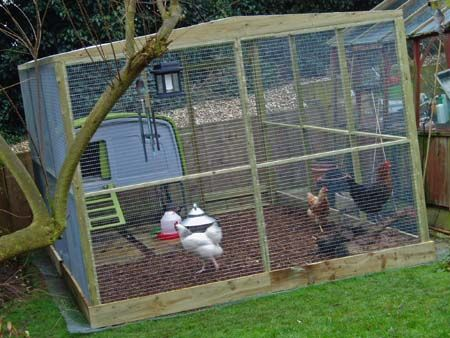 For the girls.: Chicken Coop Run, Chicken Yard, Cluckingham Palace, By