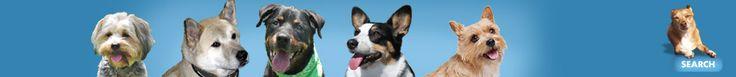 DogAware.com: Dog Treat Recipes - tonnes of them