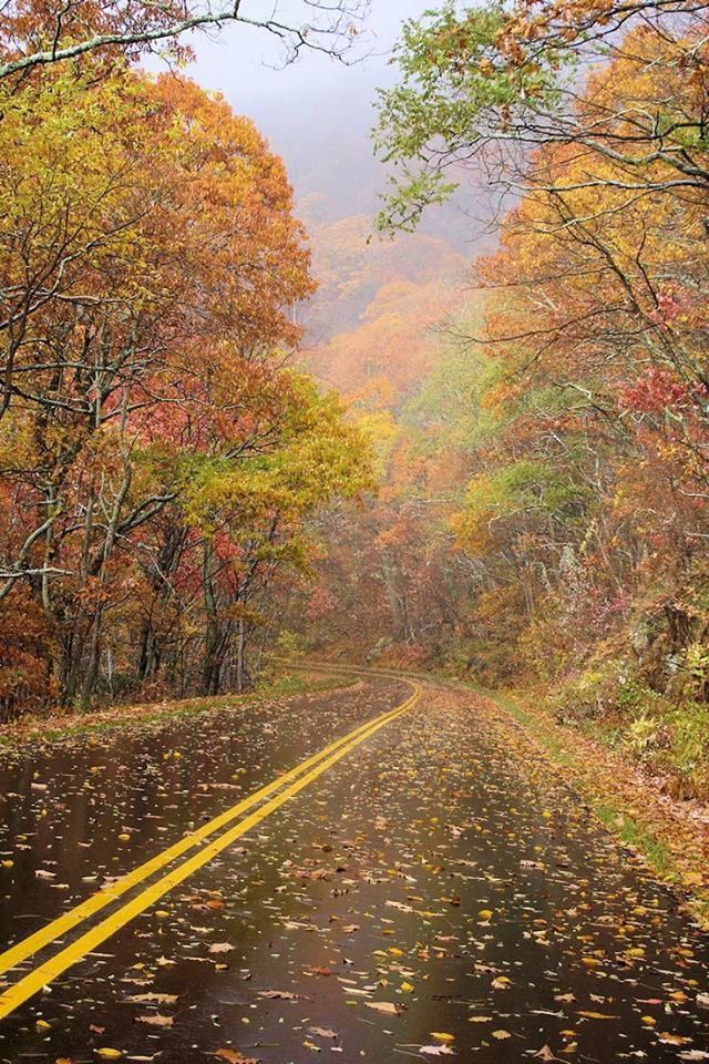 """Blue Ridge Parkway in North Carolina"" ... ~Sherry~ romanticasheville.com"