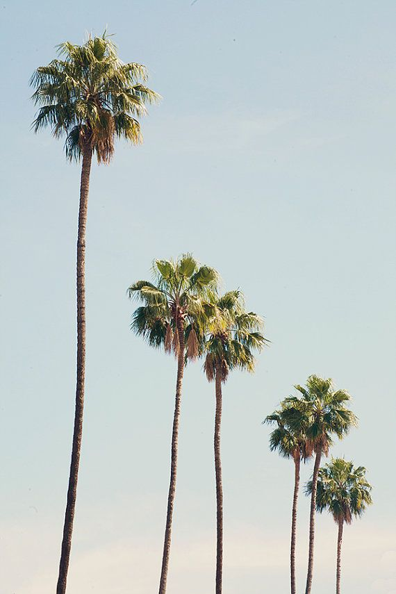 TITLE: LA Palms DESCRIPTION: Palm Trees lined streets against a pastel blue sky in Los Angeles, California. *Printed without watermark onto