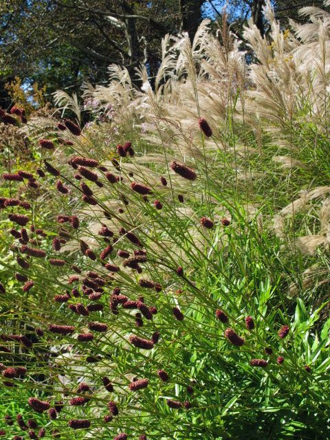 102 best plant combinations images on pinterest for Planting schemes with grasses