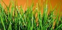 The Best Do It Yourself Lawn Fertilizers | eHow.com