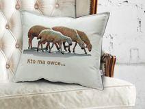 poduszka - Owce
