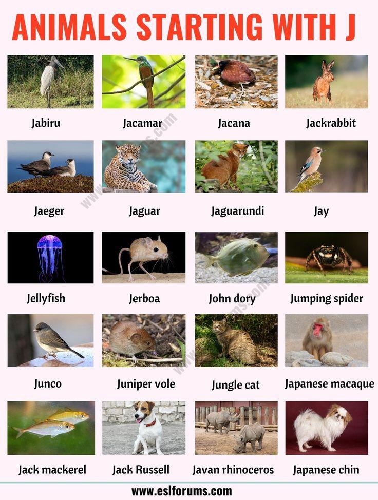 Animals That Start With J List Of 20 Animals Starting With J With Esl Picture Esl Forums In 2021 Animals Javan Rhinoceros Rhino Species