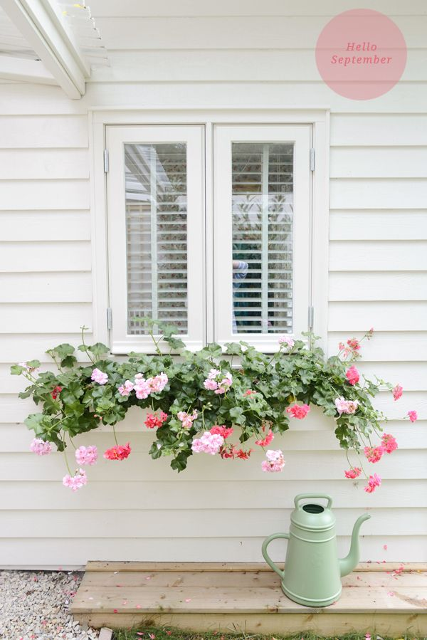 Love the shutters, white painted boards and flower box full of geraniums www.ellenmarygardening.co.uk