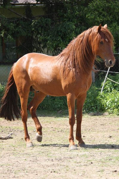 191 best images about The Heavenly Horse - Sorrel ...