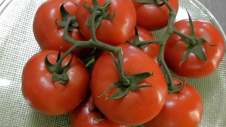 Napoletana sauce. Lovely tomatoes, so versatile!